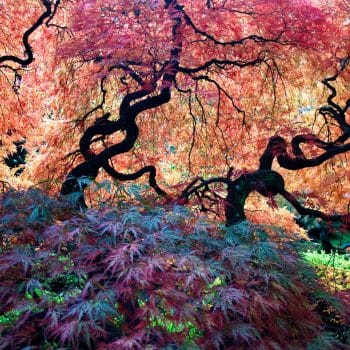 Portland Japanese Garden, Portland, U.S.A